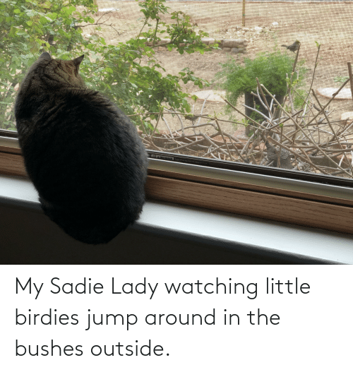 bushes: My Sadie Lady watching little birdies jump around in the bushes outside.