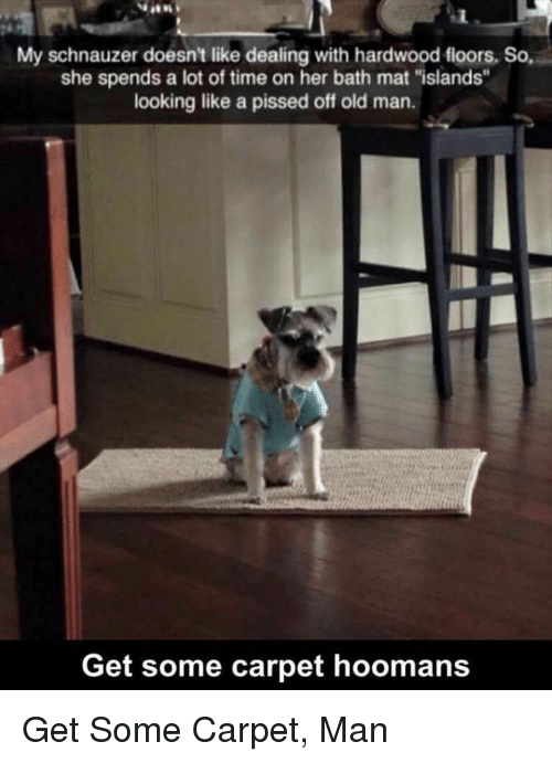 """Hoomans: My schnauzer doesn't like dealing with hardwood fioors, So,  she spends a lot of time on her bath mat """"islands""""  looking like a pissed off old man.  Get some carpet hoomans Get Some Carpet, Man"""