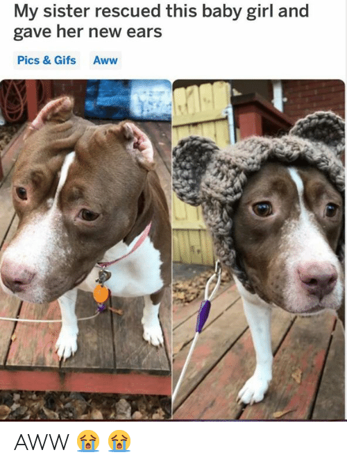 Baby Girl: My sister rescued this baby girl and  gave her new ears  Pics & Gifs Aww AWW 😭 😭