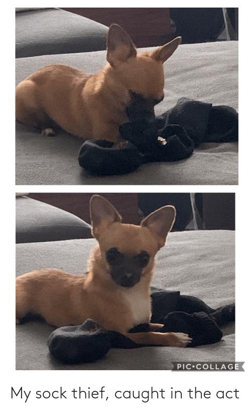 Sock: My sock thief, caught in the act