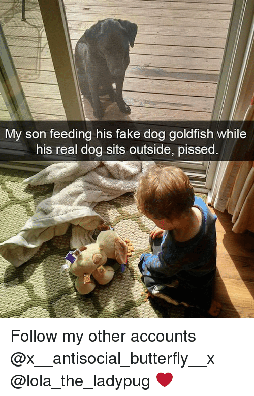 Fake, Goldfish, and Memes: My son feeding his fake dog goldfish while  his real dog sits outside, pissed Follow my other accounts @x__antisocial_butterfly__x @lola_the_ladypug ❤️