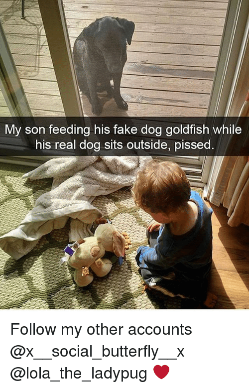 Fake, Goldfish, and Memes: My son feeding his fake dog goldfish while  his real dog sits outside, pissed Follow my other accounts @x__social_butterfly__x @lola_the_ladypug ❤️