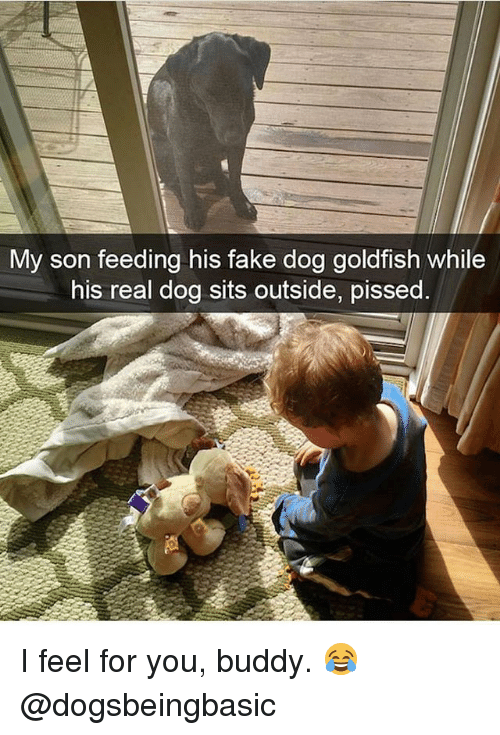 Fake, Goldfish, and Memes: My son feeding his fake dog goldfish while  his real dog sits outside, pissed I feel for you, buddy. 😂 @dogsbeingbasic
