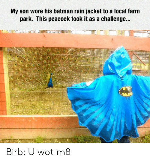 wot: My son wore his batman rain jacket to a local farm  park. This peacock took it as a challenge... Birb: U wot m8