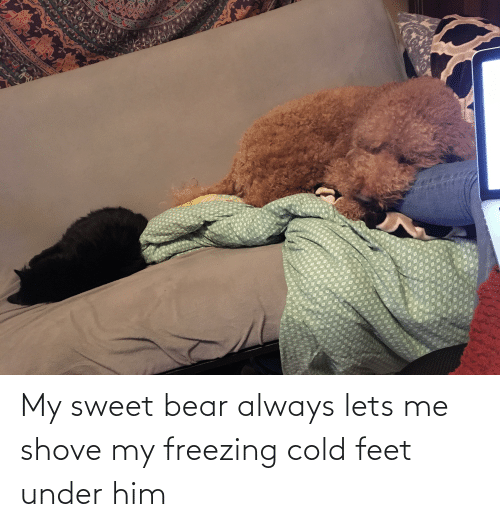 cold feet: My sweet bear always lets me shove my freezing cold feet under him