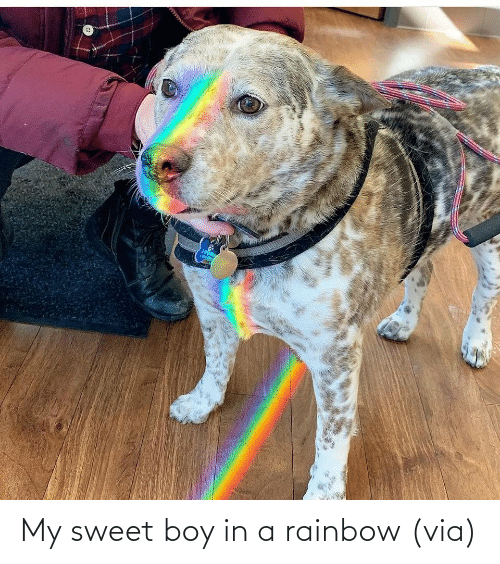 Rainbow: My sweet boy in a rainbow (via)