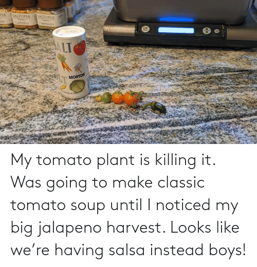 Killing: My tomato plant is killing it. Was going to make classic tomato soup until I noticed my big jalapeno harvest. Looks like we're having salsa instead boys!