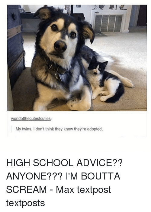 Advice, Memes, and School: My twins. I don't think they know they're adopted. HIGH SCHOOL ADVICE?? ANYONE??? I'M BOUTTA SCREAM - Max textpost textposts