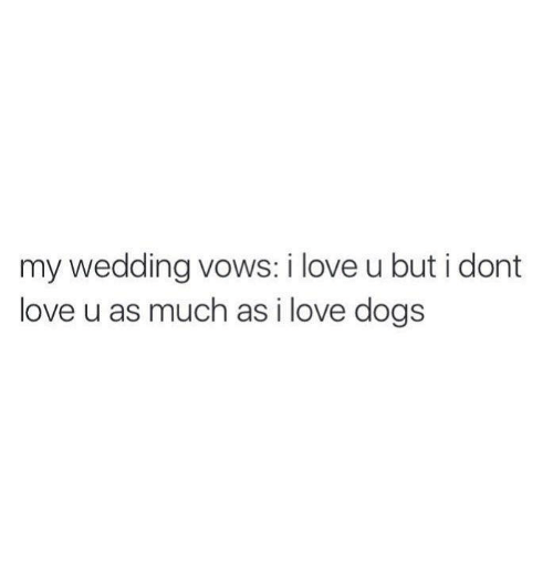 Dogs, Love, and Wedding: my wedding vows: i love u but i dont  love u as much as i love dogs