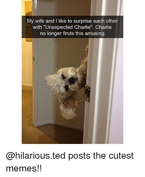 """Charlie, Memes, and Ted: My wife and I like to surprise each other  with """"Unexpected Charlie"""". Charlie  no longer finds this amusing @hilarious.ted posts the cutest memes!!"""