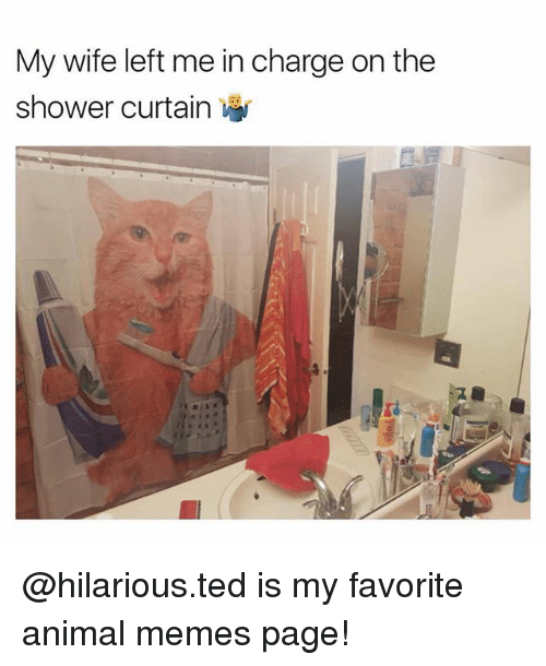 25 Best Memes About Curtain