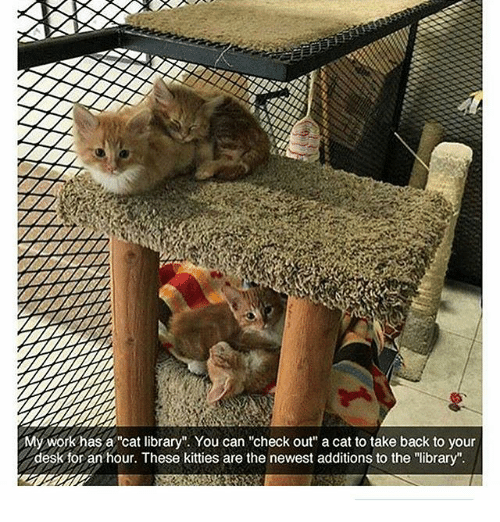 "Kitties, Memes, and Desk: My workhas a cat library"". You can ""check out"" a cat to take back to your  desk for an hour. These kitties are the newest additions to the ""library"