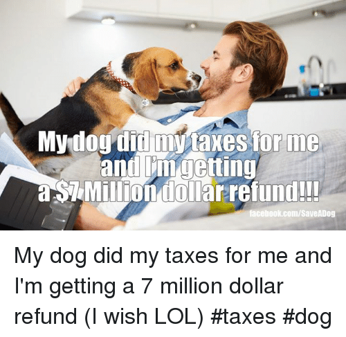 Facebook, Lol, and Memes: Mydog did my taxes for me  n doll  facebook.com/SaveADog My dog did my taxes for me and I'm getting a 7 million dollar refund (I wish LOL)      #taxes #dog