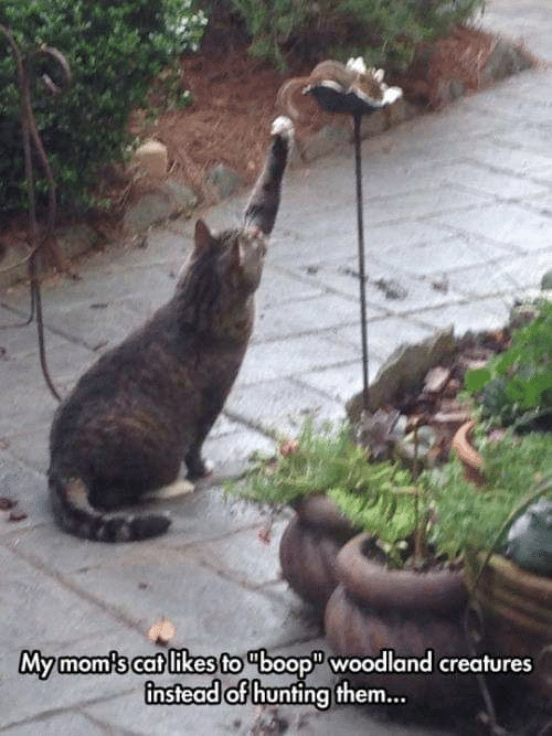 Hunting: Mymom's cat likes to boop woodland creatures  instead of hunting them...