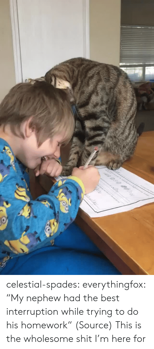 "Aww, Reddit, and Tumblr: n 0.99 celestial-spades:  everythingfox:   ""My nephew had the best interruption while trying to do his homework"" (Source)   This is the wholesome shit I'm here for"