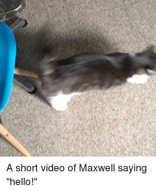"""Hello, Memes, and Video: n A short video of Maxwell saying """"hello!"""""""