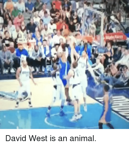 Basketball, Golden State Warriors, and Sports: N David West is an animal.