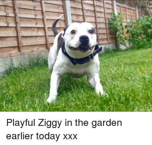 Memes, Xxx, and Today: N Playful Ziggy in the garden earlier today xxx