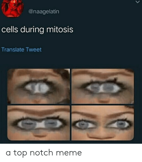 notch: @naagelatin  cells during mitosis  Translate Tweet a top notch meme