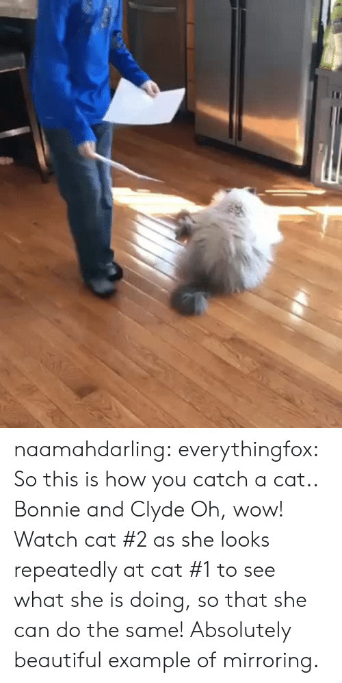 Oh Wow: naamahdarling:  everythingfox:   So this is how you catch a cat..   Bonnie and Clyde   Oh, wow! Watch cat #2 as she looks repeatedly at cat #1 to see what she is doing, so that she can do the same! Absolutely beautiful example of mirroring.