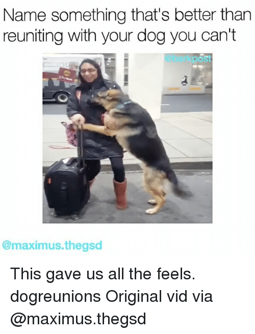 Name Something That: Name something that's better than  reuniting with your dog you can't  post  @maximus thegsd This gave us all the feels. dogreunions Original vid via @maximus.thegsd