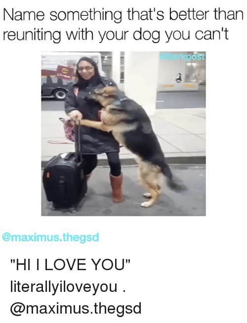 "Name Something That: Name something that's better than  reuniting with your dog you can't  rkpost  @maximus thegsd ""HI I LOVE YOU"" literallyiloveyou . @maximus.thegsd"