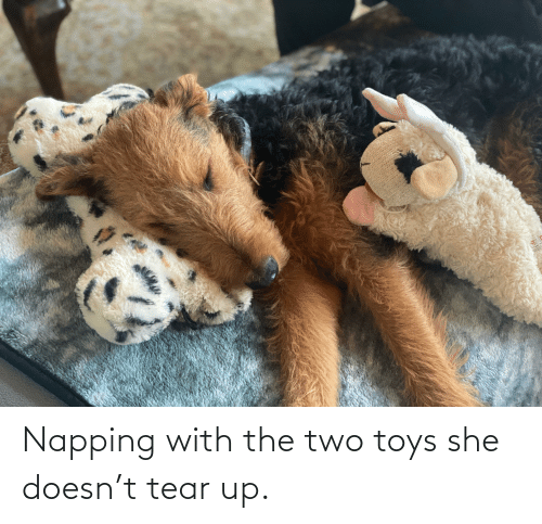 Toys: Napping with the two toys she doesn't tear up.