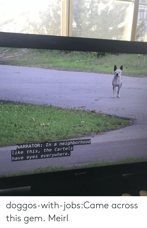 cartels: NARRATOR: In a neighborhood  like this, the Cartels  have eyes everywhere  SONY doggos-with-jobs:Came across this gem. Meirl