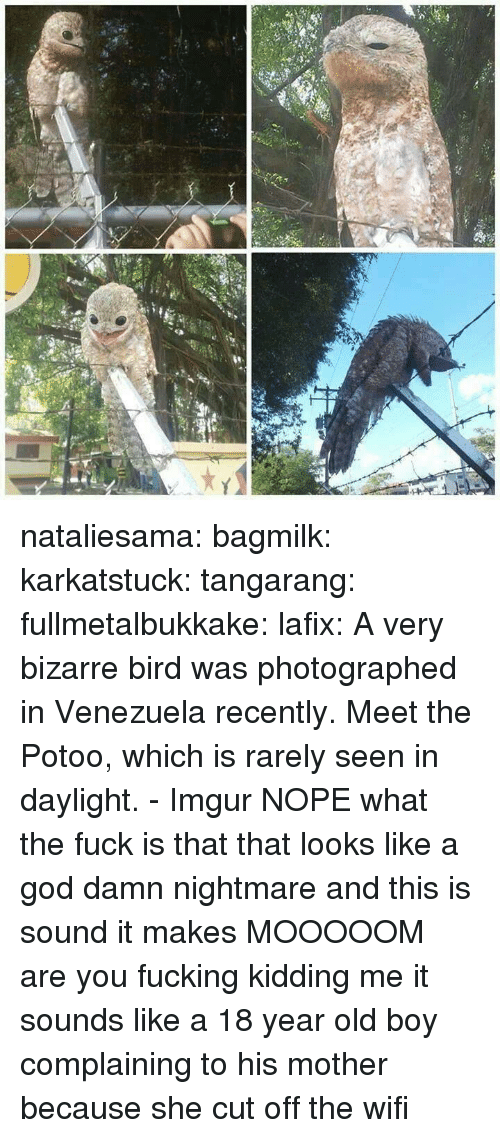 Venezuela: nataliesama: bagmilk:  karkatstuck:  tangarang:  fullmetalbukkake:  lafix:  A very bizarre bird was photographed in Venezuela recently. Meet the Potoo, which is rarely seen in daylight. - Imgur NOPE  what the fuck is that  that looks like a god damn nightmare  and this is sound it makes  MOOOOOM  are you fucking kidding me it sounds like a 18 year old boy complaining to his mother because she cut off the wifi