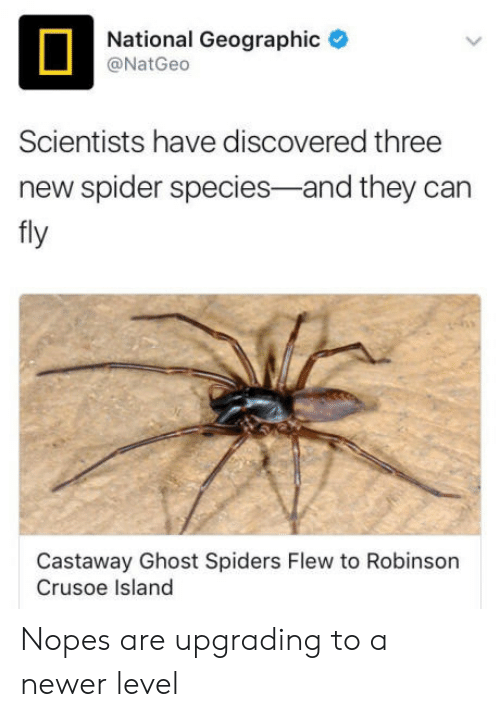 castaway: National Geographic  @NatGeco  Scientists have discovered three  new spider species-and they can  fly  Castaway Ghost Spiders Flew to Robinson  Crusoe Island Nopes are upgrading to a newer level