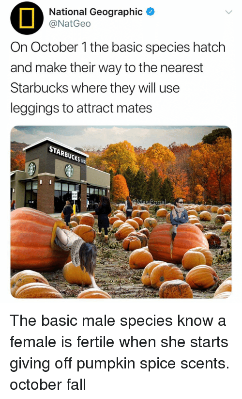 Leggings: National Geographic  @NatGeo  On October 1 the basic species hatch  and make their way to the nearest  Starbucks where they will use  leggings to attract mates  STARBUCKS The basic male species know a female is fertile when she starts giving off pumpkin spice scents. october fall