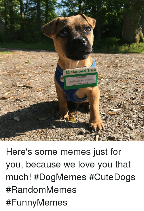 Love, Memes, and Staff: National Trust N  iscu  staff morale officer  @thebiscuitjug Here's some memes just for you, because we love you that much! #DogMemes #CuteDogs #RandomMemes #FunnyMemes