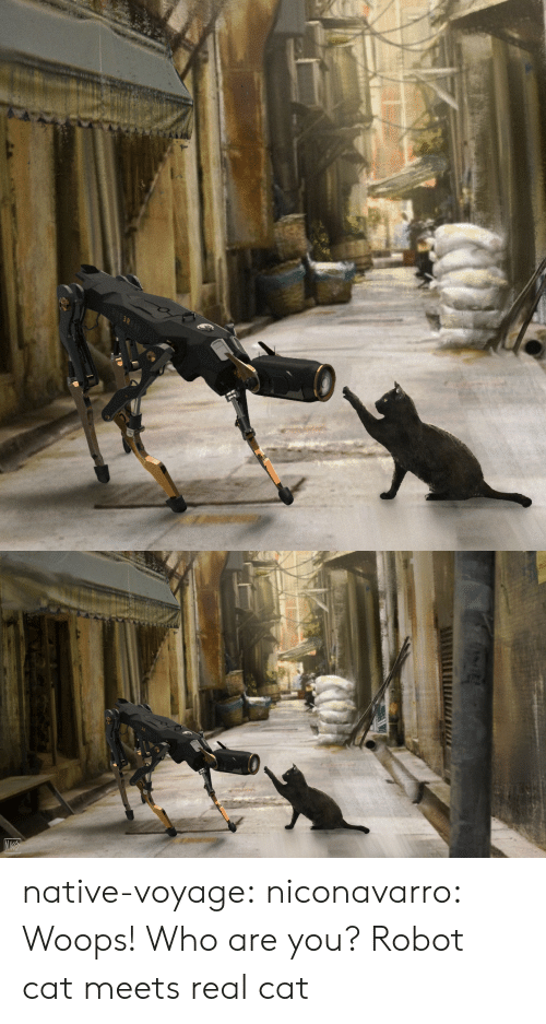 woops: native-voyage: niconavarro: Woops! Who are you? Robot cat meets real cat