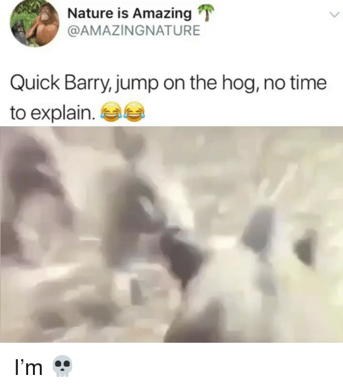no time to explain: Nature is Amazing  @AMAZINGNATURE  Quick Barry,jump on the hog, no time  to explain.e I'm 💀