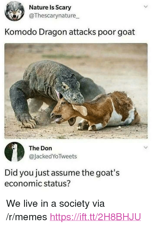 """komodo dragon: Nature Is Scary  @Thescarynature  Komodo Dragon attacks poor goat  The Don  @JackedYoTweets  Did you just assume the goat's  economic status? <p>We live in a society via /r/memes <a href=""""https://ift.tt/2H8BHJU"""">https://ift.tt/2H8BHJU</a></p>"""