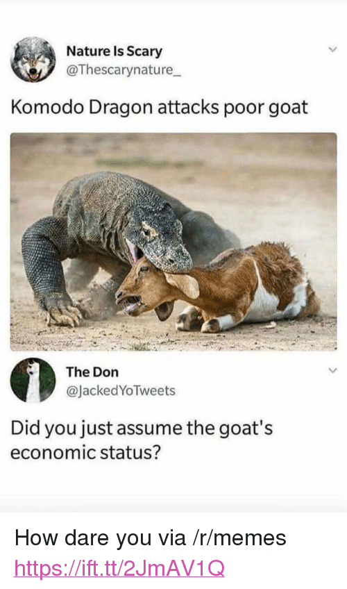 """komodo dragon: Nature Is Scary  @Thescarynature  Komodo Dragon attacks poor goat  The Don  @JackedYoTweets  Did you just assume the goat's  economic status? <p>How dare you via /r/memes <a href=""""https://ift.tt/2JmAV1Q"""">https://ift.tt/2JmAV1Q</a></p>"""