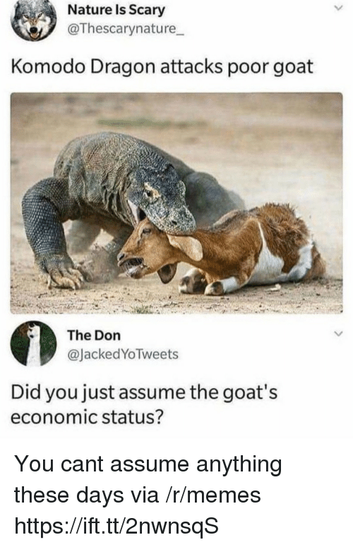 komodo dragon: Nature Is Scary  @Thescarynature  Komodo Dragon attacks poor goat  The Don  @JackedYoTweets  Did you just assume the goat's  economic status? You cant assume anything these days via /r/memes https://ift.tt/2nwnsqS