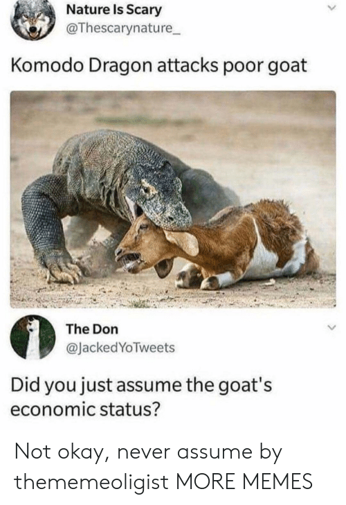 komodo dragon: Nature Is Scary  @Thescarynature  Komodo Dragon attacks poor goat  The Don  @JackedYoTweets  Did you just assume the goat's  economic status? Not okay, never assume by thememeoligist MORE MEMES