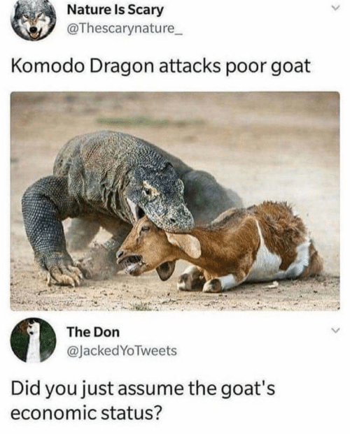 komodo dragon: Nature Is Scary  @Thescarynature  Komodo Dragon attacks poor goat  The Don  @JackedYoTweets  Did you just assume the goat's  economic status?
