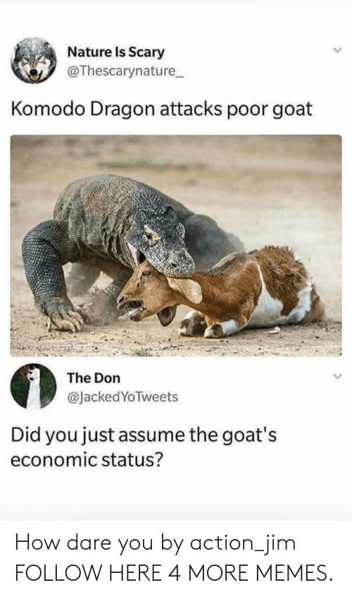 komodo dragon: Nature Is Scary  @Thescarynature  Komodo Dragon attacks poor goat  The Don  @JackedYoTweets  Did you just assume the goat's  economic status? How dare you by action_jim FOLLOW HERE 4 MORE MEMES.