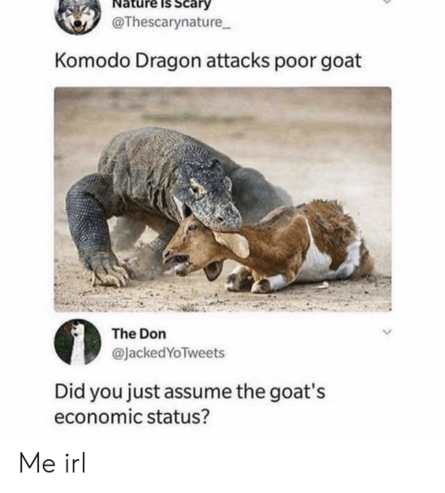 komodo dragon: Nature Is Scary  @Thescarynature  Komodo Dragon attacks poor goat  The Don  @JackedYoTweets  Did you just assume the goat's  economic status? Me irl