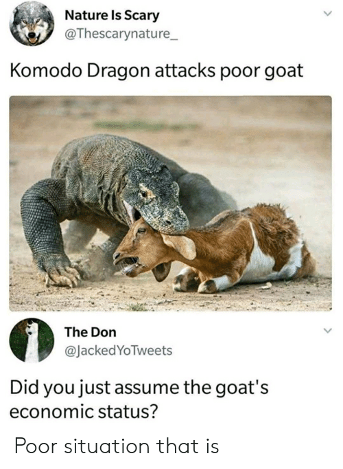 komodo dragon: Nature Is Scary  @Thescarynature  Komodo Dragon attacks poor goat  The Don  @JackedYoTweets  Did you just assume the goat's  economic status? Poor situation that is