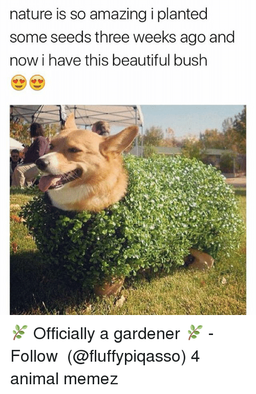 Beautiful, Memes, and Animal: nature is so amazing i planted  some seeds three weeks ago and  now i have this beautiful bush 🌿 Officially a gardener 🌿 - Follow ➞ (@fluffypiqasso) 4 animal memez