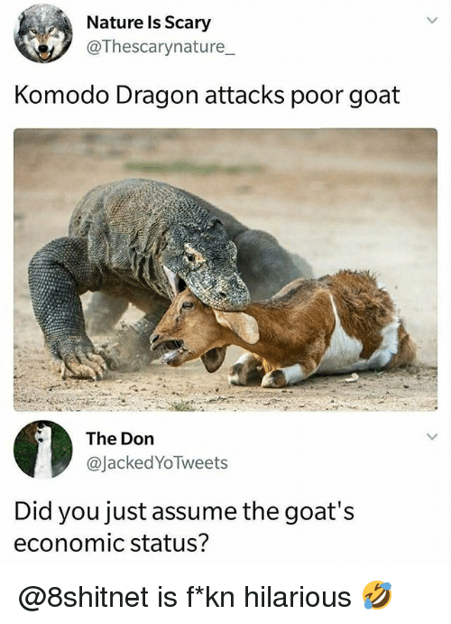 Memes, Goat, and Nature: Nature ls Scary  @Thescarynature  Komodo Dragon attacks poor goat  The Don  @JackedYoTweets  Did you just assume the goat's  economic status? @8shitnet is f*kn hilarious 🤣