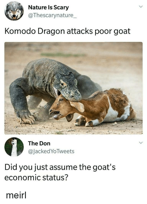 komodo dragon: Nature ls Scary  @Thescarynature_  Komodo Dragon attacks poor goat  The Don  @JackedYoTweets  Did you just assume the goat's  economic status? meirl