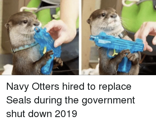 Otters, Navy, and Government: Navy Otters hired to replace Seals during the government shut down 2019