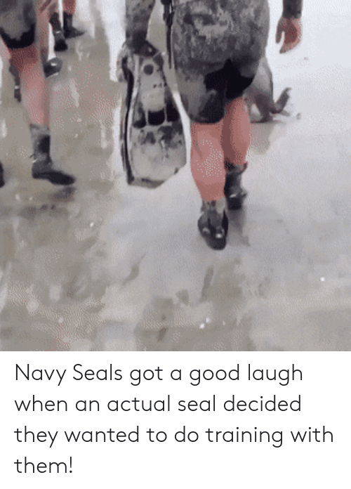 navy seals: Navy Seals got a good laugh when an actual seal decided they wanted to do training with them!