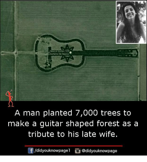 Memes, Guitar, and Trees: Nazca Guitar  Guitarra De Nazca  A man planted 7,000 trees to  make a guitar shaped forest as a  tribute to his late wife.  /didyouknowpagel  Cu  @didyouknowpage