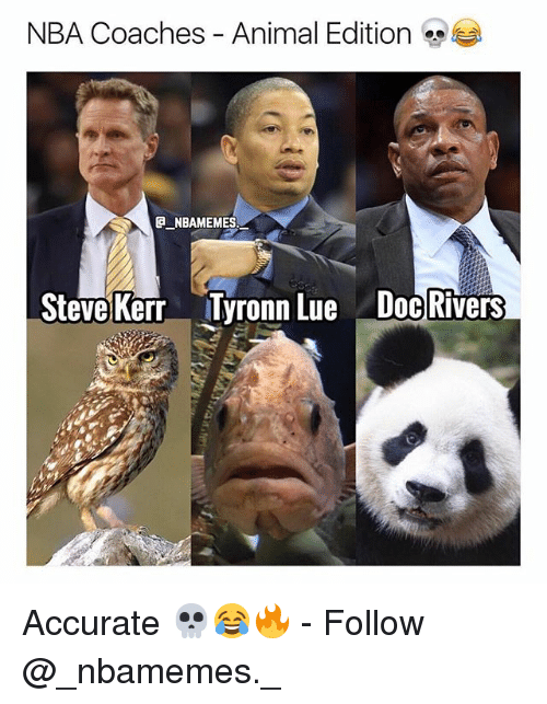 Memes, Nba, and Tyronn Lue: NBA Coaches - Animal Edition  NBAMEMES  Steve Kerr Tyronn Lue Doc Rivers Accurate 💀😂🔥 - Follow @_nbamemes._