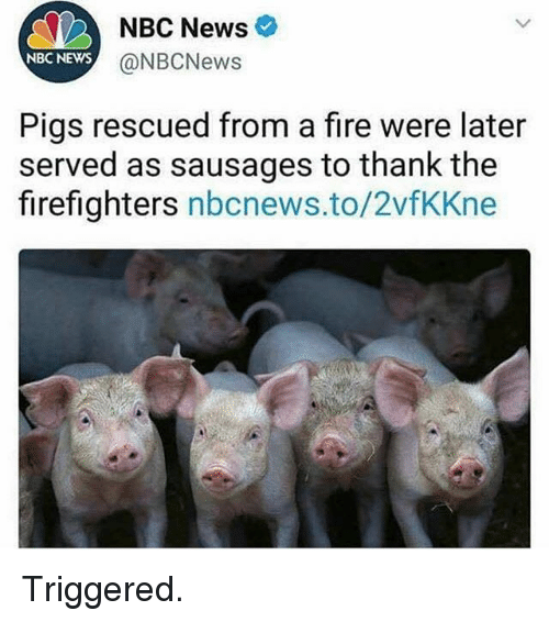 Fire, Gym, and News: NBC News  @NBCNews  NBC NEWS  Pigs rescued from a fire were later  served as sausages to thank the  firefighters nbcnews.to/2vfKKne Triggered.